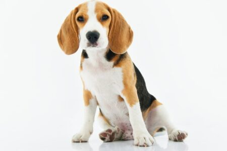 Is your dog having major tummy issues? Click here to learn about the common causes of an upset stomach in dogs with tips on how to give your pup relief.